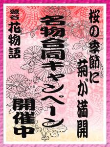 桜の季節に菊高